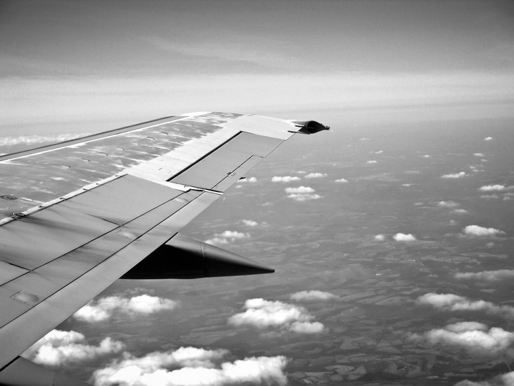 wing-238469_960_720